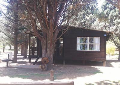 pine-trees-mid-02