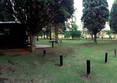 pine-trees-mid-05