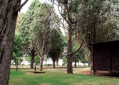 pine-trees-mid-10